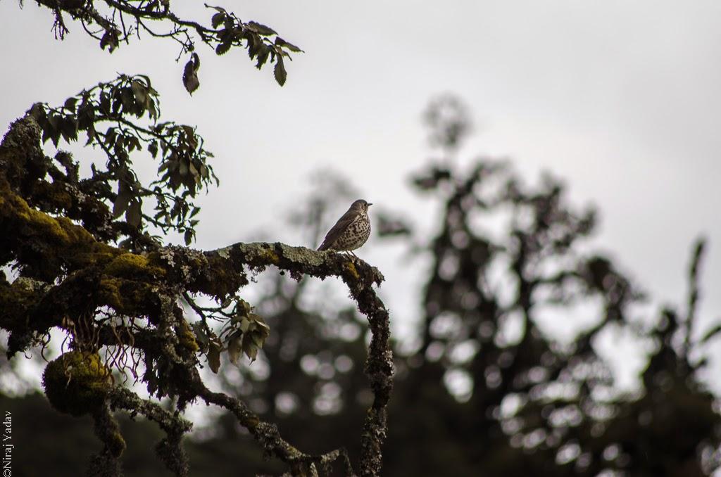 Bird spotting near Ukhimath Deoria Tal