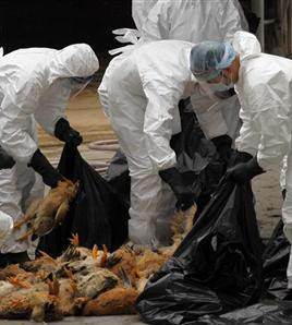 Bird flu in US 2012