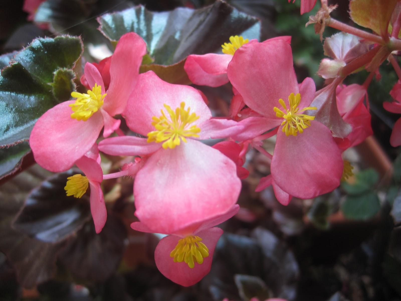 Un tren en casa y flores en mi arriate flores en mi arriate - Arriate plantas ...