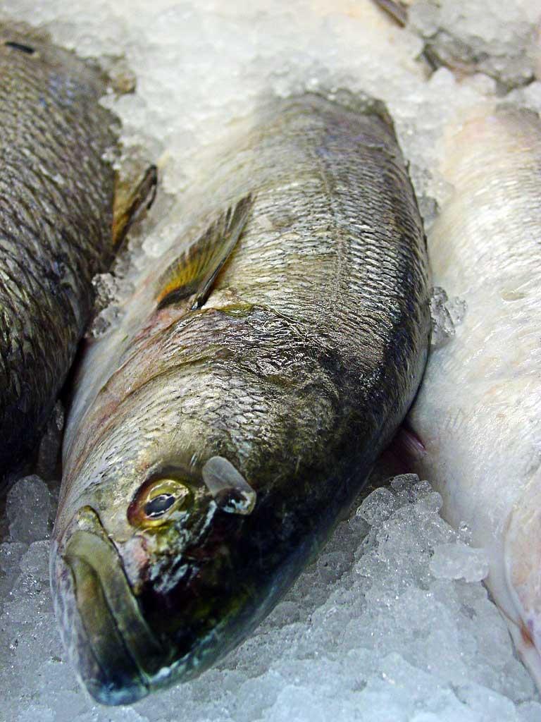 Memilih Ikan Segar