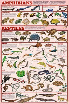 List of amphibians  Wikipedia