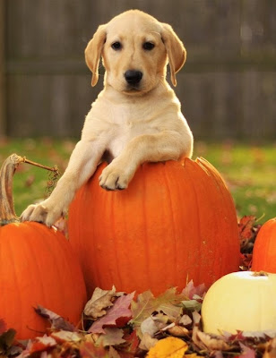 TheJungleStore.com Blog | Puppy With Pumpkins