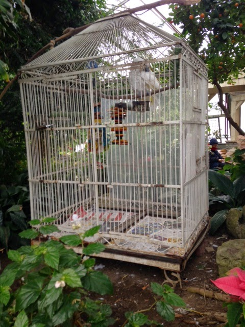 centennial park greenhouse toronto