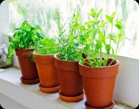 Vital e saud vel plantas arom ticas de interior e exterior - Plantas aromaticas interior ...