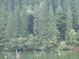 in jurul Lacului Rosu