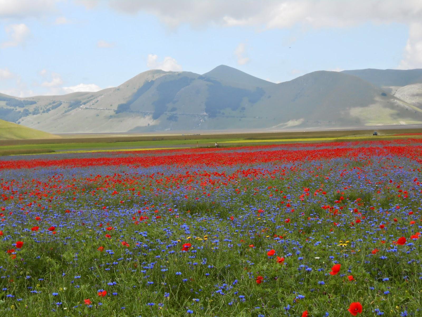 la collina dei mici le fioriture multicolore dei piani di