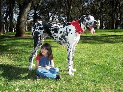 biggest animal in world. 15 World#39;s Amazing and Biggest