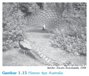 Hewan tipe australia