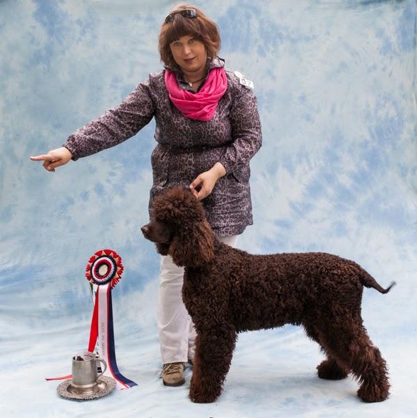 Dimi Doukas / Doukas Arts kuvaamana Spanieliliiton juhlanäyttelyn voittaja