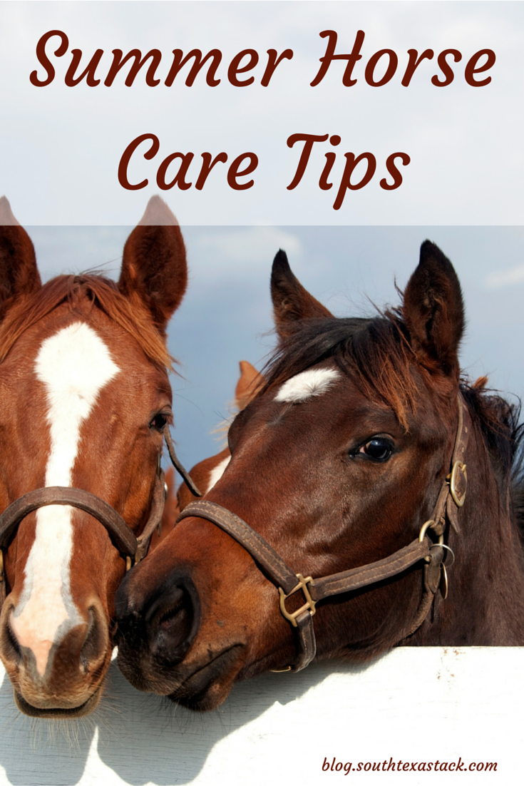 summer horse care tips