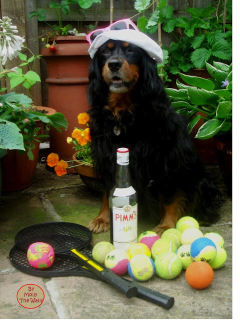 Molly The Wally does tennis!