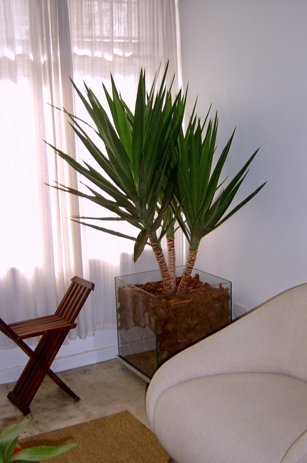 Blog Amor Perfeito: Plantas para ter dentro de casa  #475C18 1062x1600