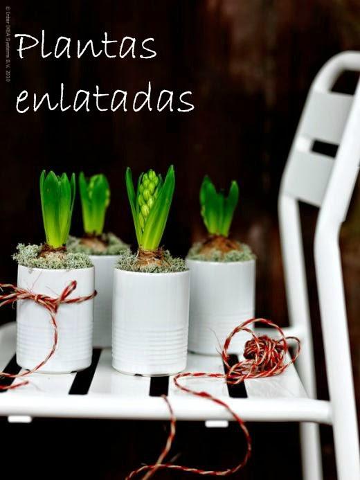 PLANTAS ENLATADAS: #DiarioDeco11 + Sorteo