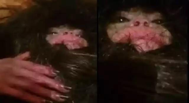 «Παράξενο» τριχωτό πλάσμα έπιασαν στο Αζερμπαϊτζάν (Βίντεο)