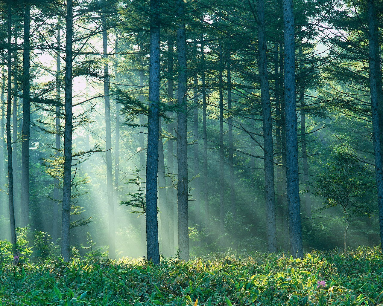 forest with sun streaming in