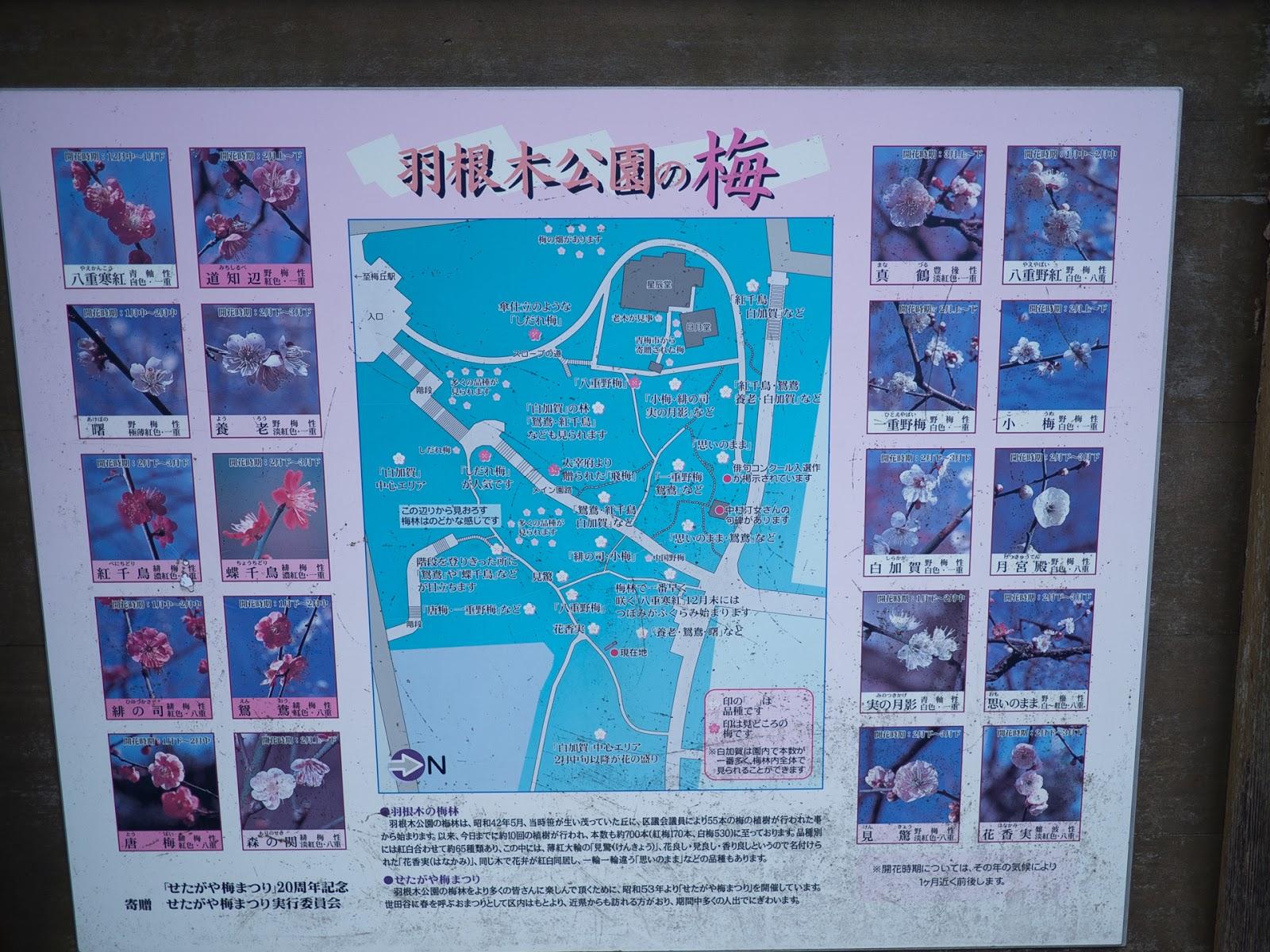 羽根木公園の梅の品種(種類)