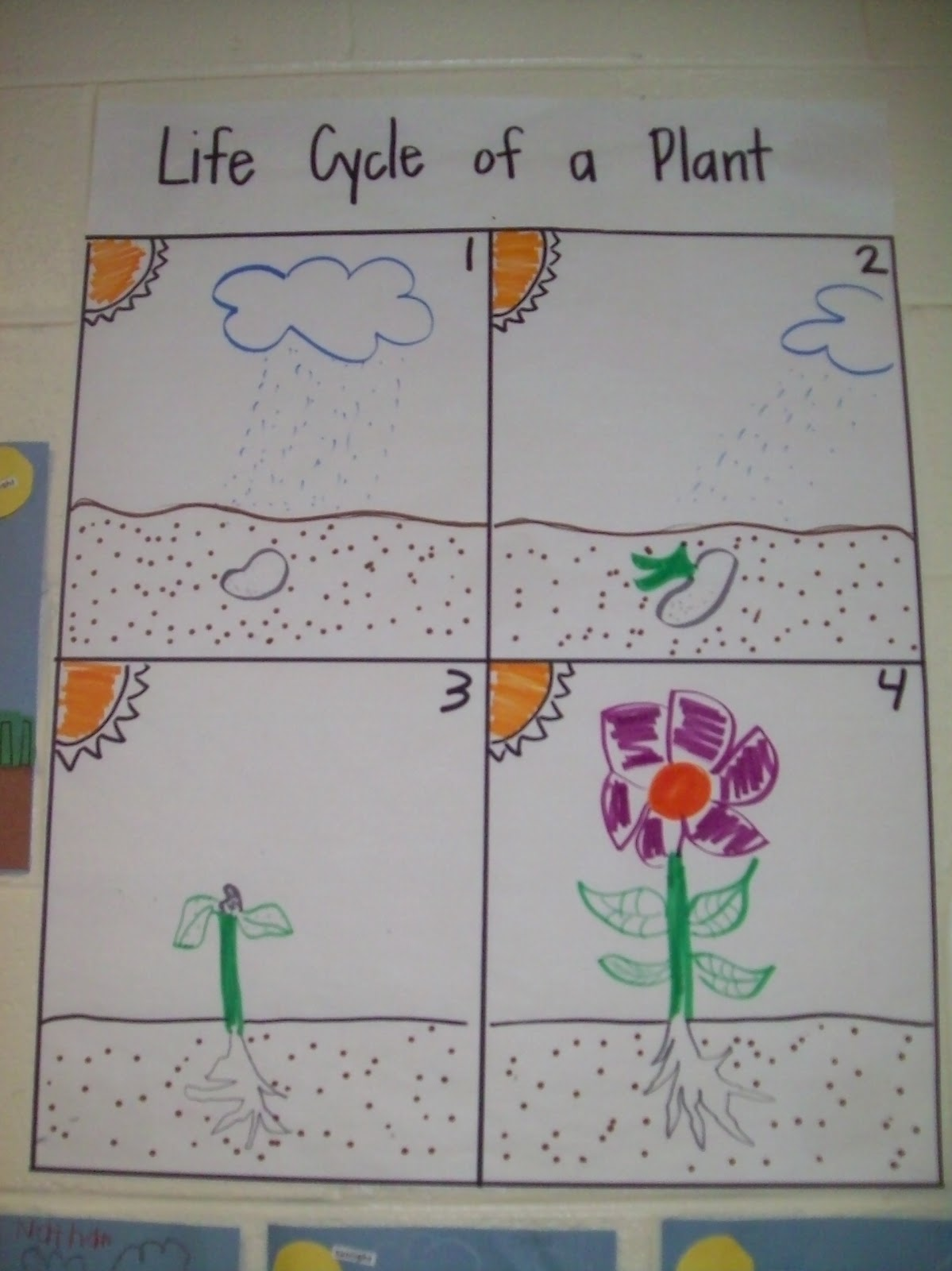 Ches press plant life cycle ms halls kindergarten class has been studying the life cycle of flowering plants check out their amazing art work ccuart Image collections