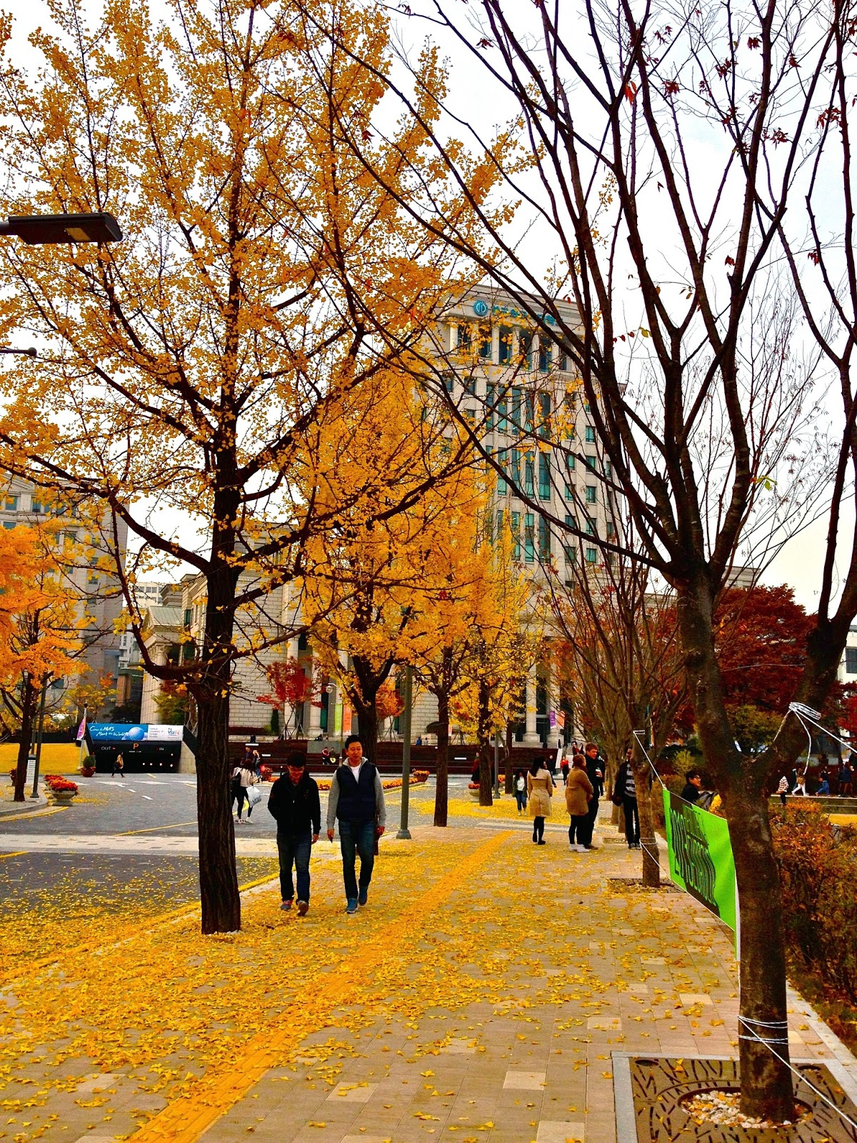 Hankuk University Seoul Autumn