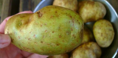 احذروا من البطاطس الخضراء ask-julie-are-green-potatoes-poisonous-1.jpg