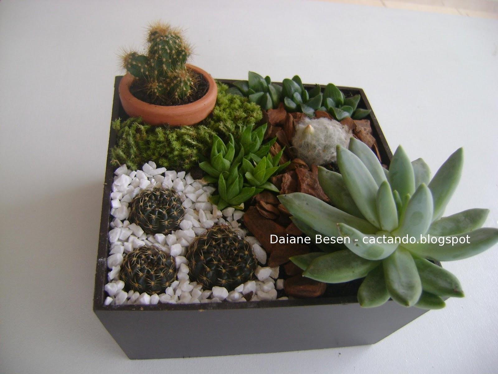 mini jardim de suculentas passo a passo : mini jardim de suculentas passo a passo:um botão de flor, e outro de espinhos amarelos dentro do vasinho de
