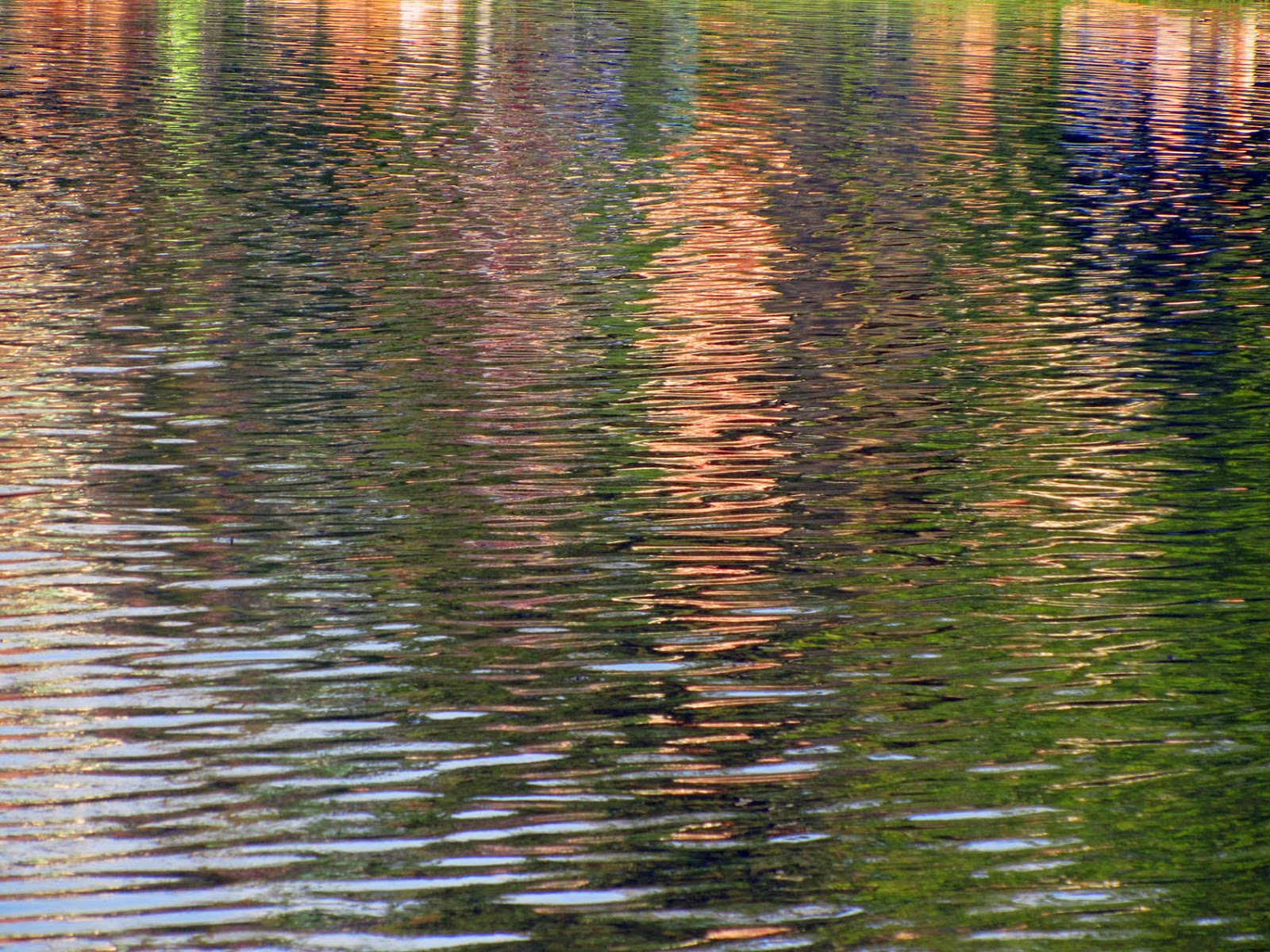 reflections of buildings in a pond