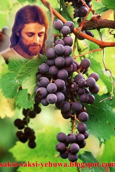 pokok anggur yang benar buah roh