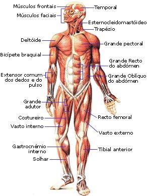 Las lesiones musculares Lesiones%2Bmusculares