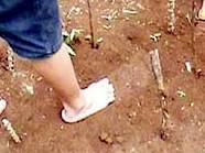 Penemuan jejak kaki raksasa di cimais jawa barat