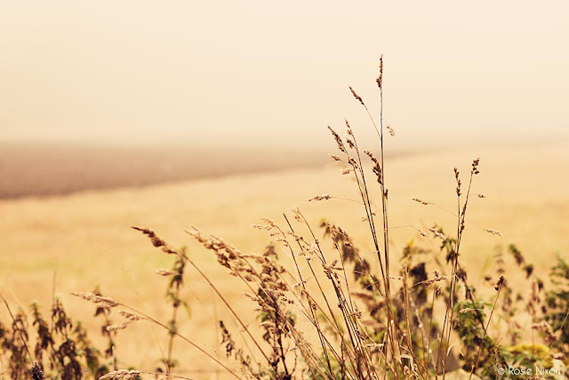 grass and ploughed field in fog