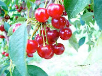Suco de cereja recupera força muscular de atleta