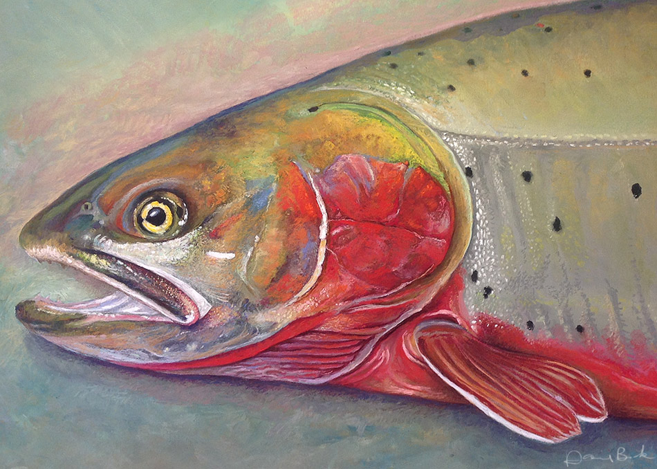 how to catch cutthroat trout