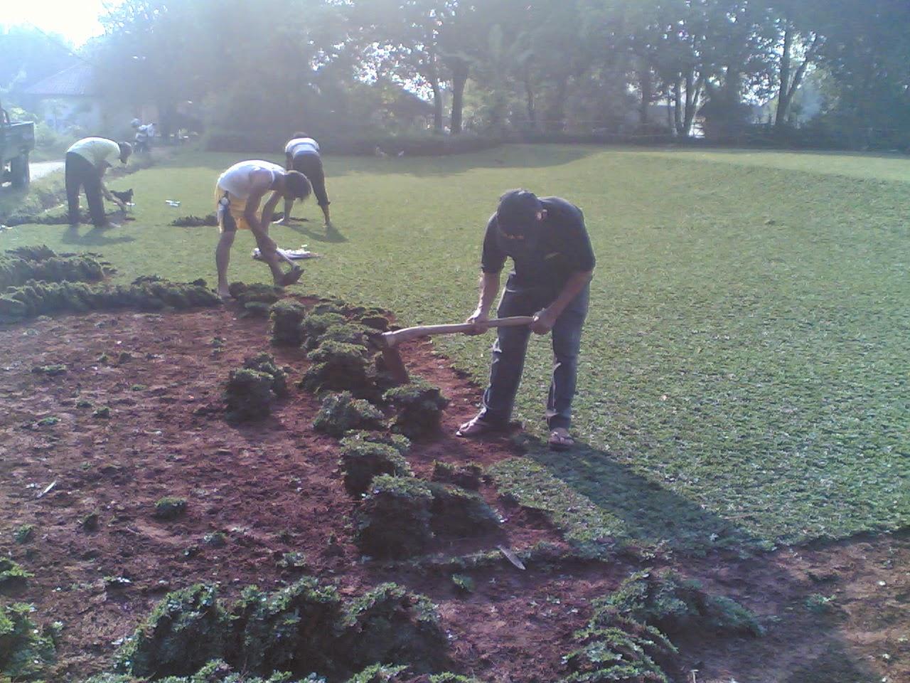 Tukang taman rumput | Tukang taman minimalis | Dekorasi taman | Saung gazebo