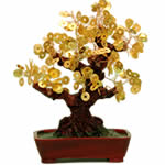 Golden money tree brings prosperity blessings activate - Money tree feng shui placement ...