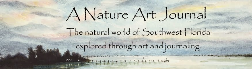 A Nature Art Journal in Southwest Florida