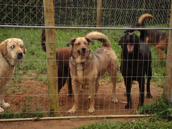 Dogs in Brazil