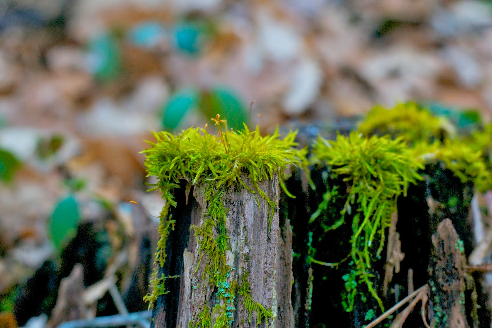 moss sits vibrantly on a decaying log