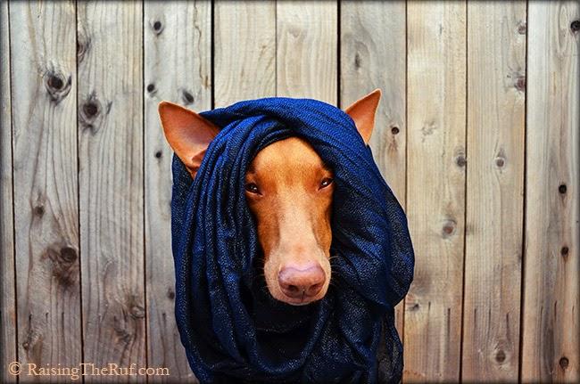 best dog photo