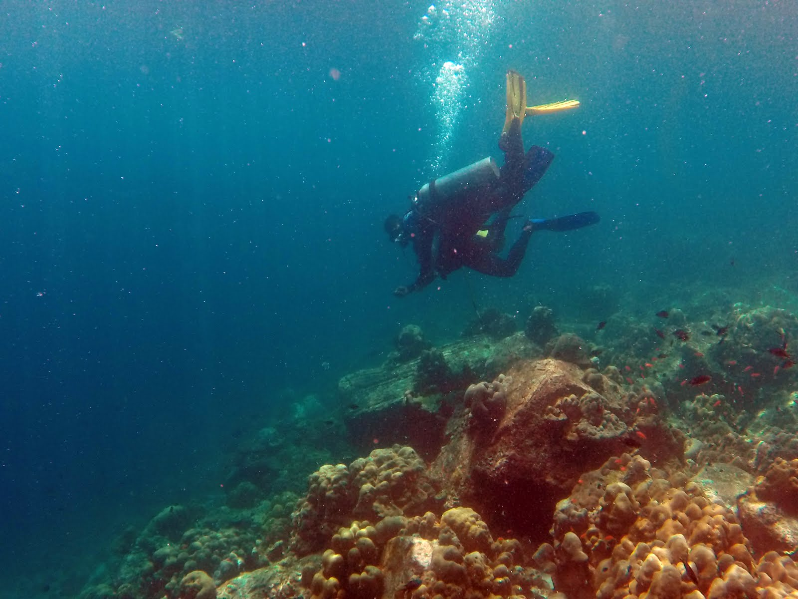 DIVING in PRAMUKA ISLAND