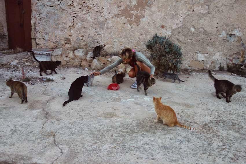 les chats de Maristella