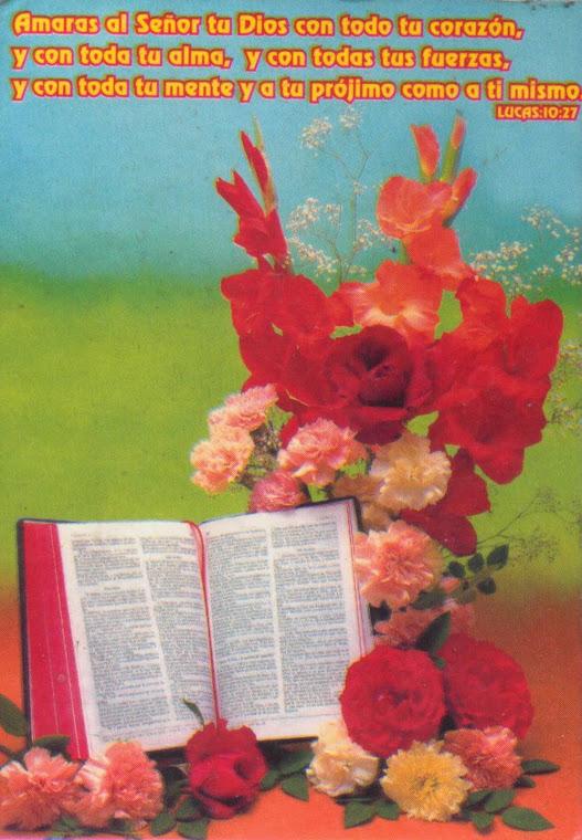 Bíblia, Flores  e Versículo