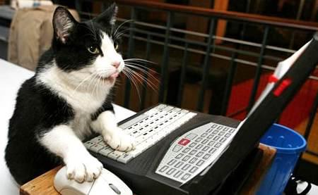 gato usando laptop