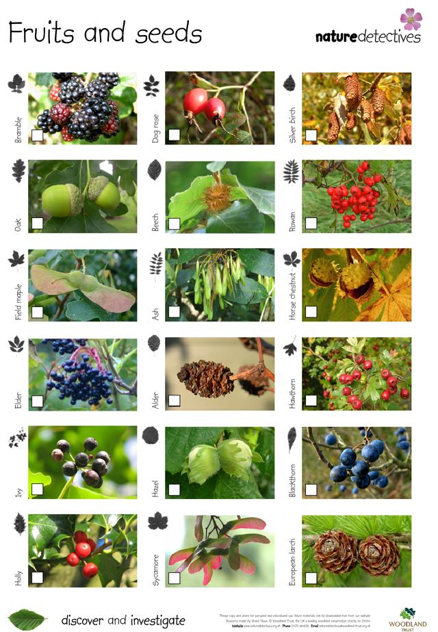 21+seeds.jpg