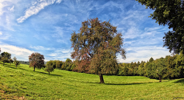 Automne en foret, Haute-Savoie