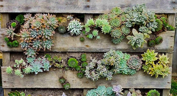 Crasas y cactus for Jardin vertical reciclado