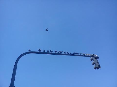 que se te vuelen los pájaritos