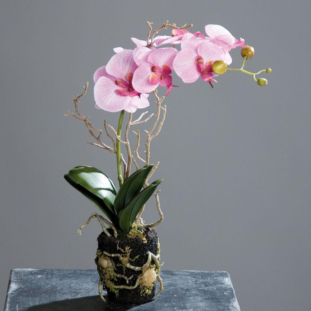 Piscine et jardin choisir et entretenir ses orchid es for Entretenir une orchidee en pot
