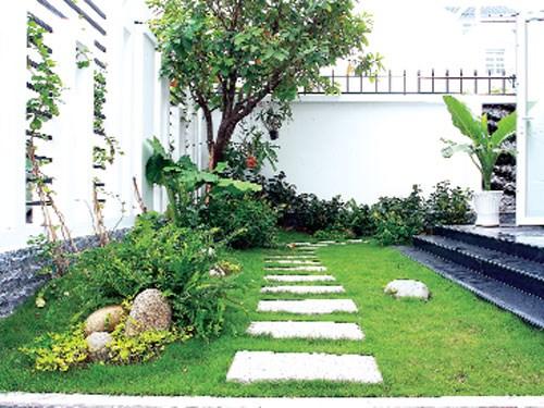 Trồng cây xanh trong nhà cần tuân thủ quy tắc đúng phong thủy