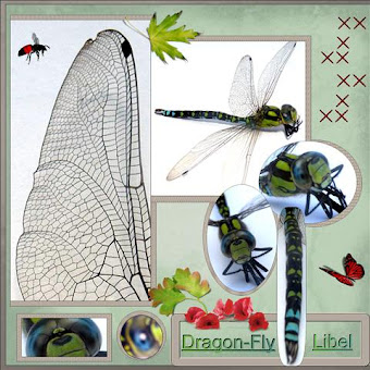 Lo 1..Dragon-fly..Libel