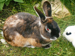 Vita ... da conigli
