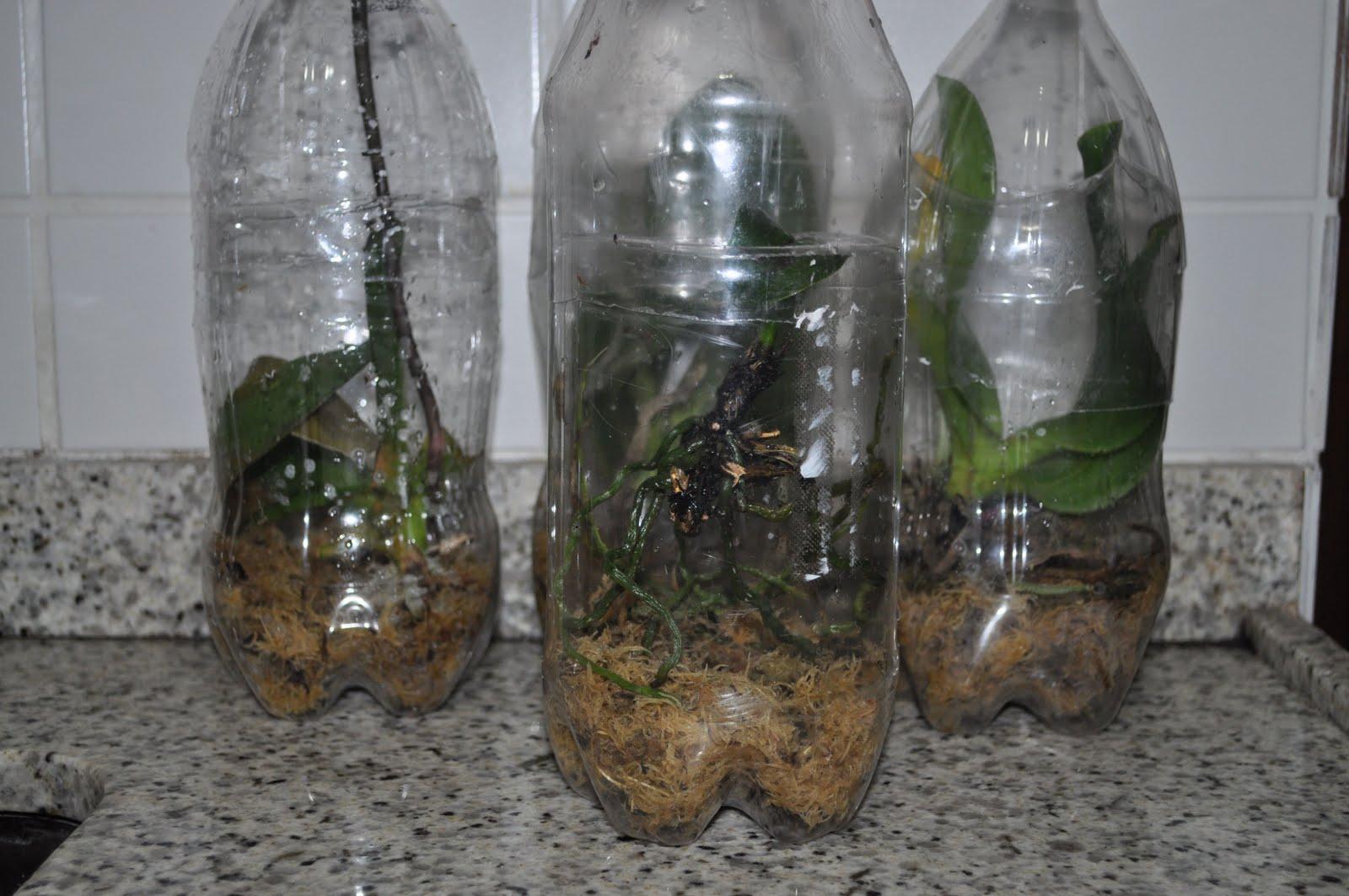 Paixão por orquídeas Meu orquidário: S.O.S. UTI para orquídeas #5D4E3B 1600x1063